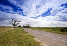 Tree in the rural Royalty Free Stock Photos