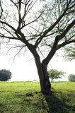 Tree in rural area Stock Image