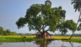 Tree, Rural Area, Plant, Wetland Royalty Free Stock Photography