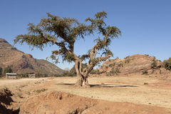 A tree, rural Ethiopia Stock Photo