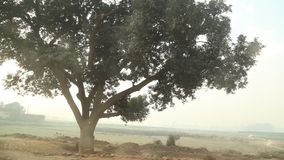 Tree in the Rural Fields.  stock video