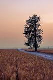 Tree by a rural road. Royalty Free Stock Photos