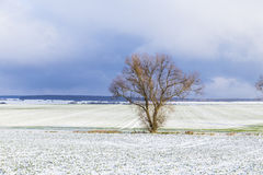 Tree in rural winter landscape Royalty Free Stock Photo
