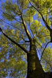 Tree rushes up to the sky with light Royalty Free Stock Images