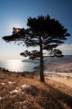 Tree from Russia. Near Vladivostok, Russia, Far-East. Autumn royalty free stock photos