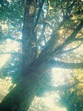 Tree& x27; s 免版税库存照片