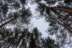 Trees in the sky stock images