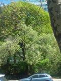 Tree& x27 ; s de la vie aiment une vérité impressionnante image stock