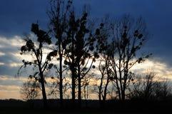 Tree& x27; s en hemel Stock Foto's