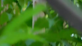 Tree`s green leaves movement stock video