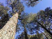 Tree's Royalty Free Stock Image