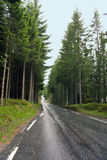 Tree's line a round a road. Picture was taken in Norway Royalty Free Stock Image