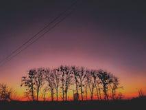 Tree& x27; s in MA lizenzfreies stockfoto