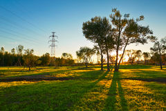 The tree's shadow sunset landscape daqing Royalty Free Stock Image