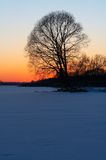Tree's silhouette. At winter sunset royalty free stock images