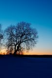 Tree's silhouette. At winter sunset Stock Photos