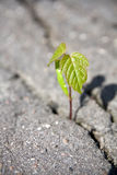 Tree's sprout Stock Image