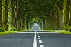 Tree's tunnel Royalty Free Stock Photography