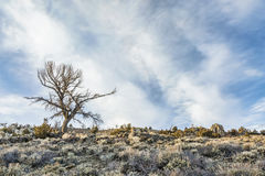 Tree, sagebrush and rocks Stock Photos