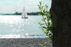 Tree and Sailing Boat on the Ammersee Royalty Free Stock Images