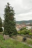 Tree and Saint Jean Pied de Port Stock Photography