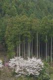 Tree and sakyra flower Stock Photos