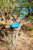 Tree for sale Stock Photo