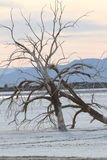 Tree at Salton Sea Stock Image