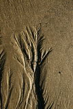 Tree of the sand Royalty Free Stock Photos