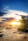 Tree in sand desert Royalty Free Stock Image