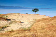 Tree on sand dune in morning sunlight. Drents-Friese wold, Drenthe, Friesland, Netherlands Royalty Free Stock Photos