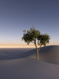 Tree on Sand Dunes. A tree on a barren desert horizon Royalty Free Stock Photo