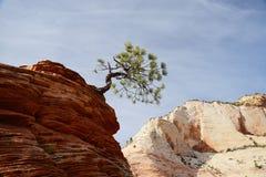 Tree on sandstone rock Royalty Free Stock Image