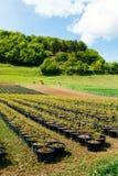 Tree saplings at farm Stock Photo