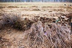 Tree saplings on ground Stock Image