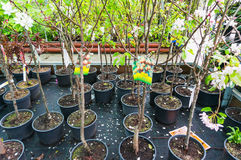 Tree saplings for sale Stock Photography