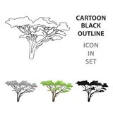 Tree in the savannah.African safari single icon in cartoon style vector symbol stock illustration web. Tree in the savannah.African safari single icon in Royalty Free Stock Photos