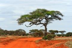 Tree in savannah Royalty Free Stock Photography