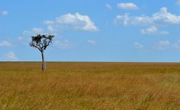 Tree on the Savannah Stock Photos