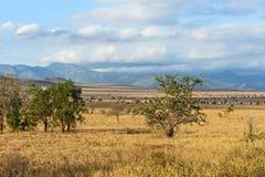 Tree in the savannah of Tsavo Royalty Free Stock Photos