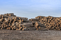 Tree saw logs Stock Photos