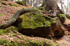 Tree, Saxon Switzerland Royalty Free Stock Photo