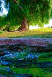 Tree scape. Magical scene of a tree above a stream bank, blue stones and moss exotic colors stock image