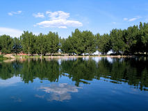 Tree Scenic. Beautiful scenery taken from a boat, Trees, reflection stock photography