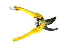 Tree scissor. Stock Images