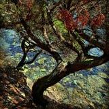 Tree on the sea Royalty Free Stock Photo