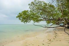 Tree at sea beach Stock Photos