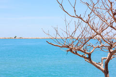 The tree and the sea blue sky background. Stock Photo