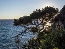 Tree and sea of Cap Martin Royalty Free Stock Photos