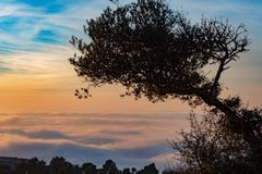 Tree in the sea of clouds stock image